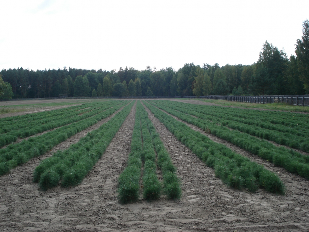 фото посева лесного питомника речь развивается
