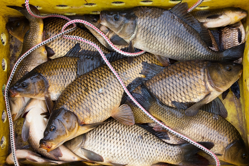 Рыбалка на карпа видео