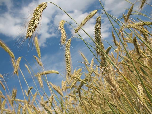 В Пензенской области собрали более 2 млн тонн зерна и 1 млн тонн свеклы