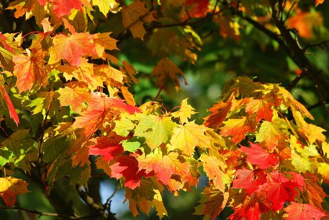 Золотая осень. Сегодня в Пензенской области до +13 градусов