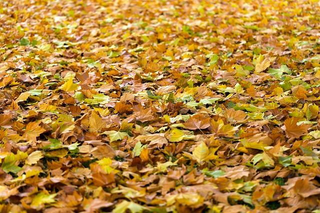 В понедельник в Пензенской области потеплеет до +15 градусов