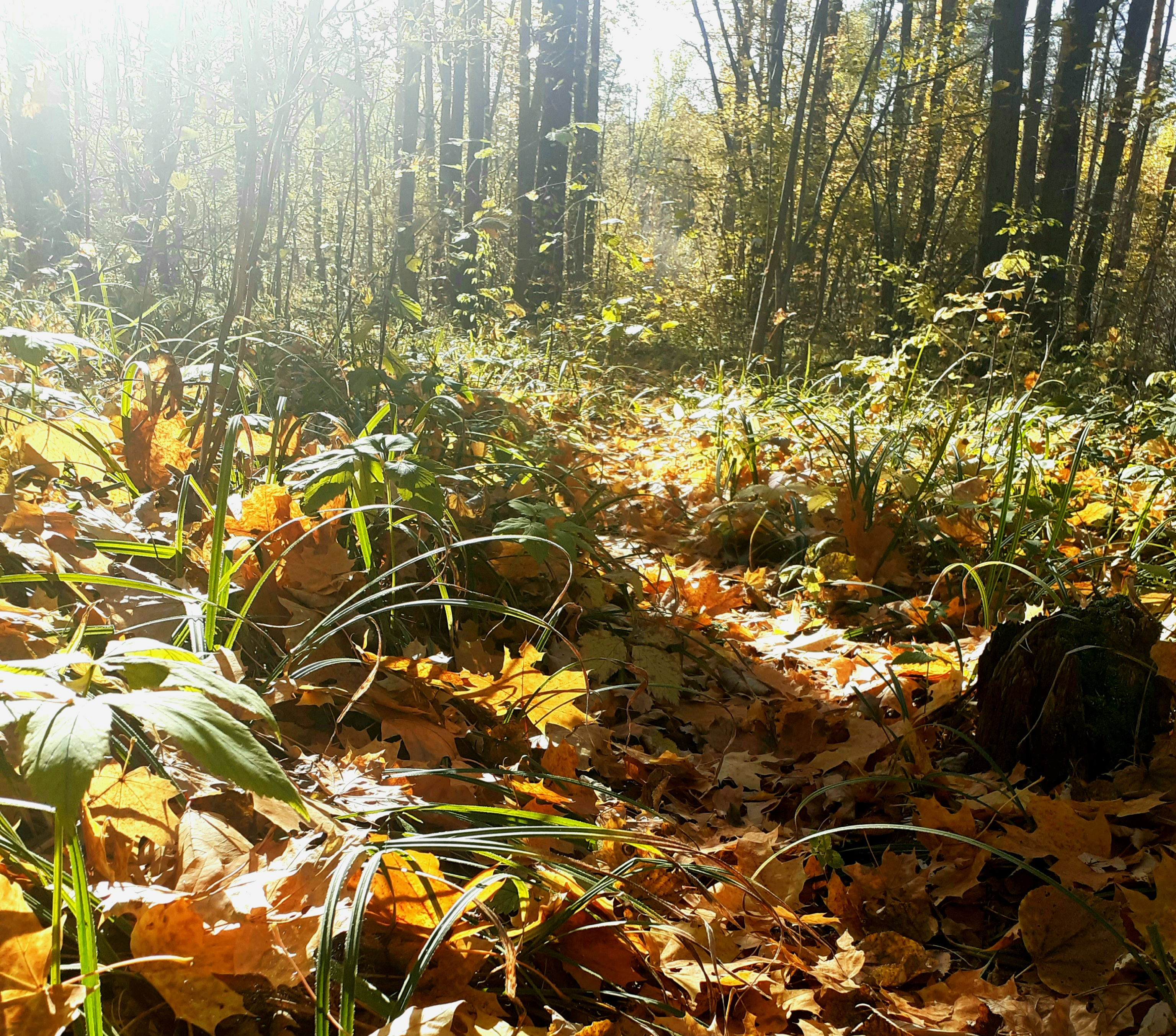 В воскресенье жителей Пензенской области ожидает теплая и солнечная погода