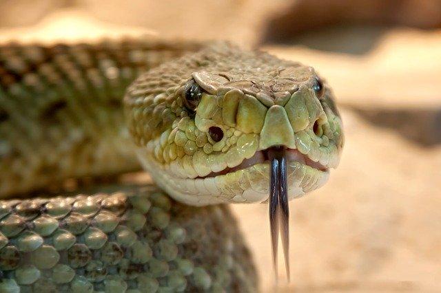 В Пензенской области фиксируют случаи укусов змей