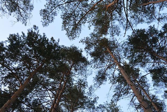 В Пензенской области ожидается усиление порывов ветра