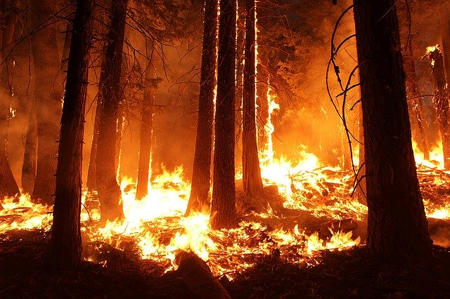 В Лунинском районе Пензенской области произошел лесной пожар