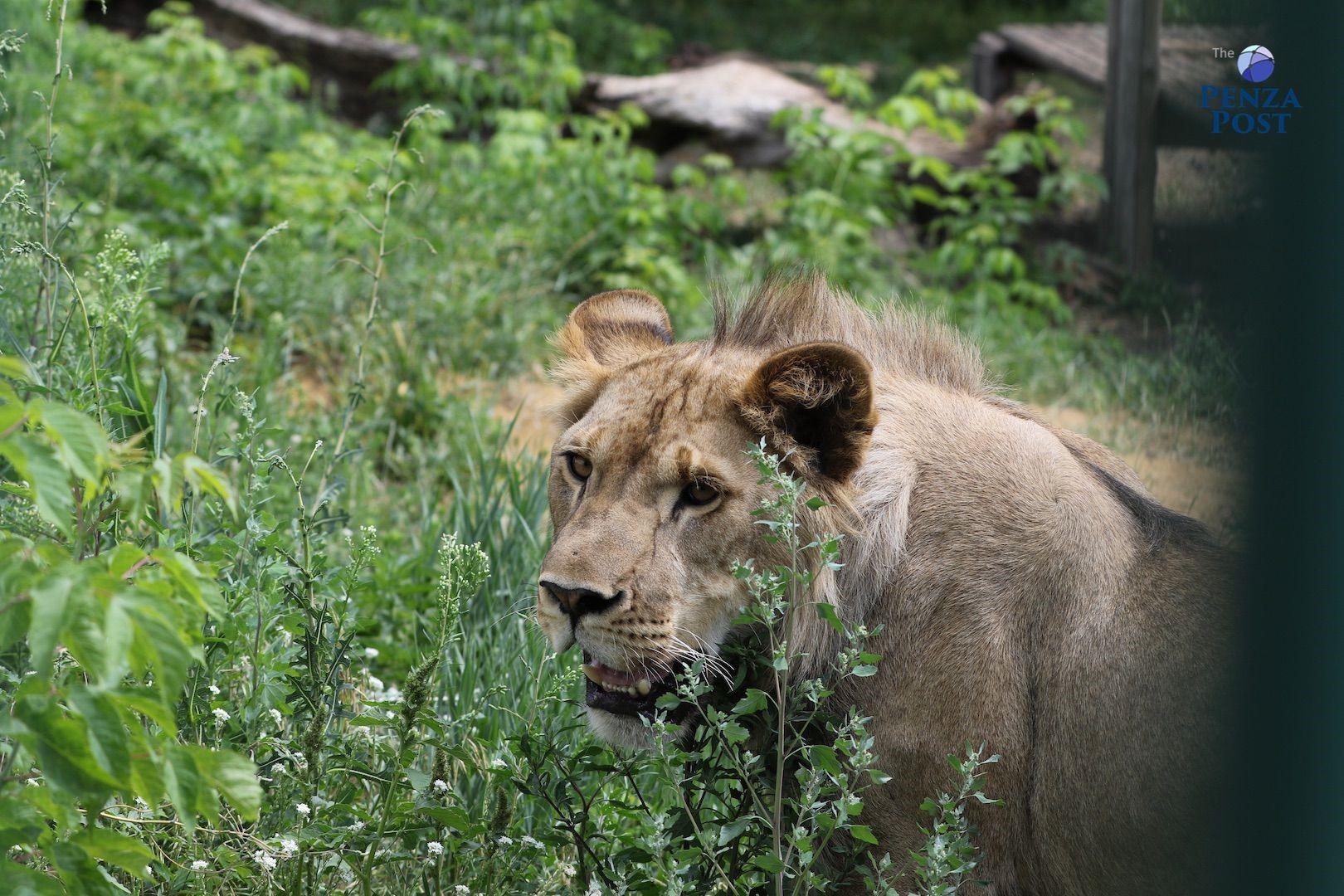 Пензенцев предупреждают об изменении режима работы зоопарка