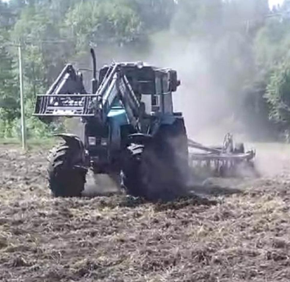 В Пензенской области созданы кормовые поля для диких животных