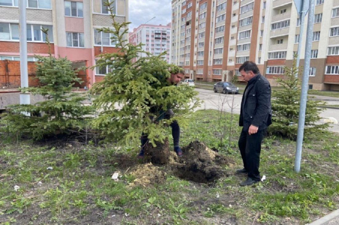 В Пензе высадили деревья ко Дню Победы